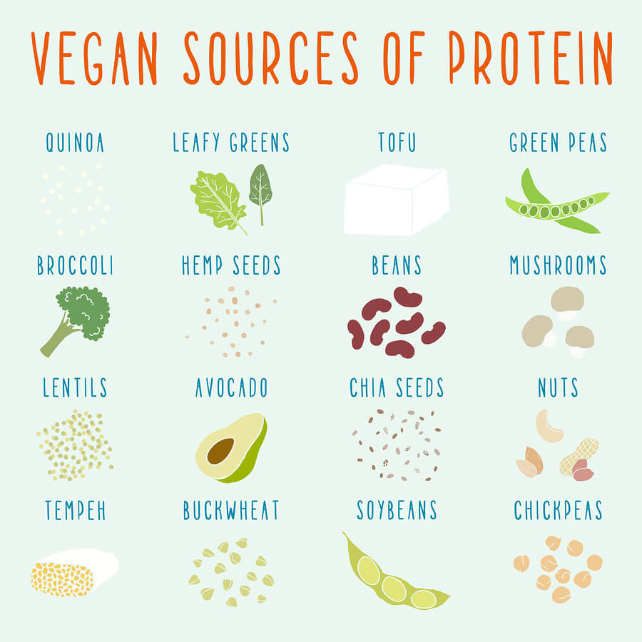 מקורות צמחיים לחלבון